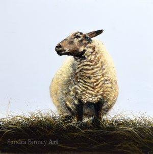 Sheep – working title
